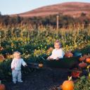 My Little Pumpkins, Half Moon Bay, CA